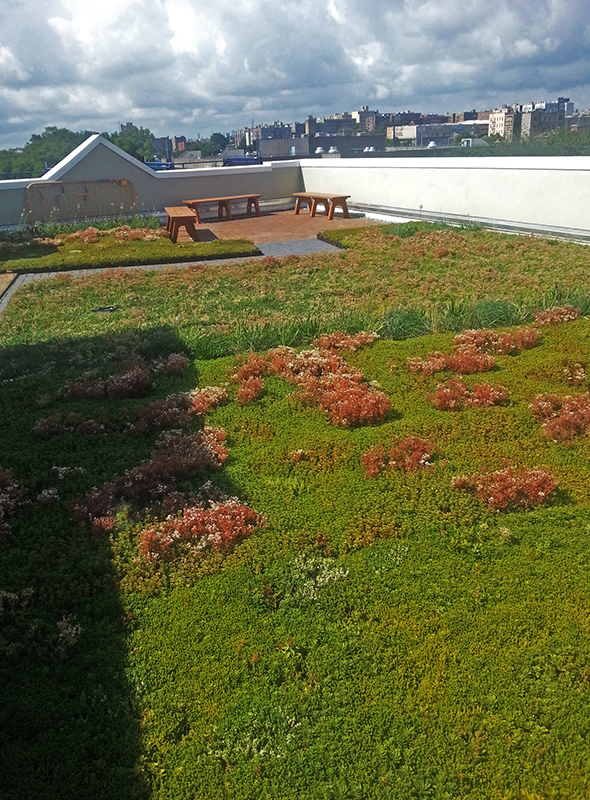 BRAC Green Roof row 4 right